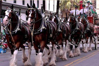 Celebrate St. Patrick's Day in Savannah